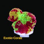 ultra eclectus jawbreakers mushroom
